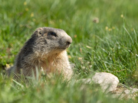 Enjoy Groundhog Day festivities a few days early at the Wilderness Station on Saturday.