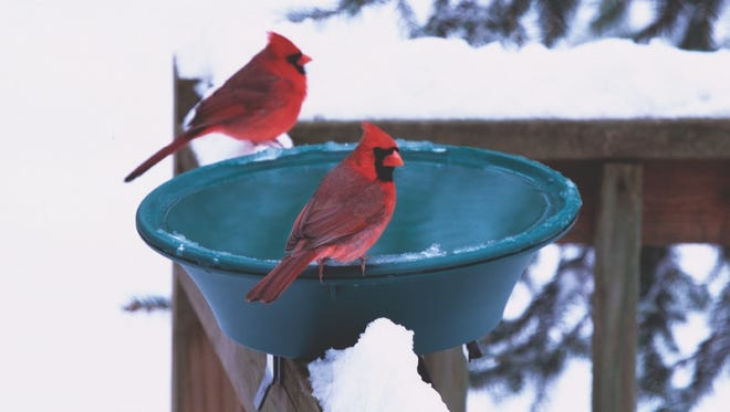 Birds need water year round and will drink and bathe in a heated bird bath during the winter.