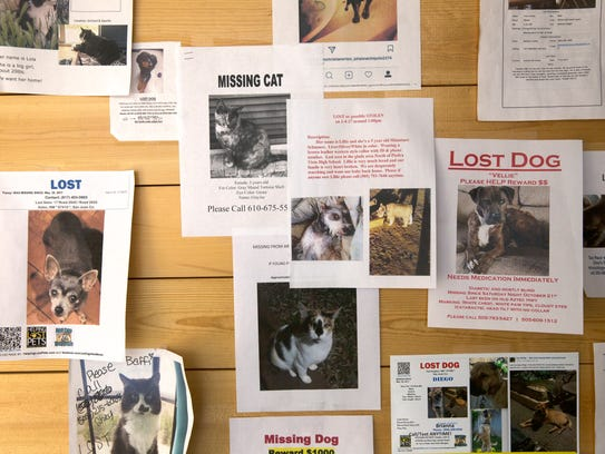 Posters of missing pets hang on a wall at the Farmington Regional Animal Shelter.