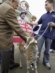 FILE - In this Oct. 14, 2003, file photo, Sam Sianis, left, and his son, Tom, arrive with a goat outside Wrigley Field before in Game 6 of the National League Championship Series in Chicago. Seventy years ago, Sam's uncle, Bill Sianis, the owner of the Billy Goat Tavern put a curse on the Cubs when they wouldn't let his pet goat attend the World Series. As the Cubs take on the Mets in the hopes of getting to the World Series for the first time since 1945 and winning it for the first time since 1908, Cubs fans swear that this team will win because of the way they play and not because a curse was lifted. (AP Photo/Anne Ryan, File)