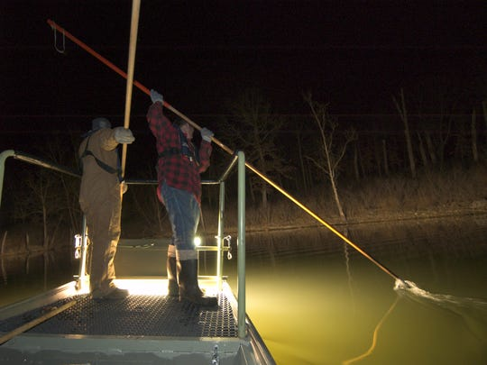 Fish gigging season is Sept. 15-Jan. 31