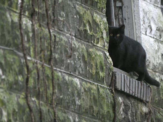 A feral cat sits on a window ledge in an abandoned