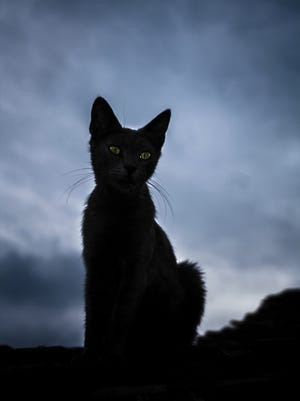 Black cats are often considered unlucky, just like Friday the 13th.