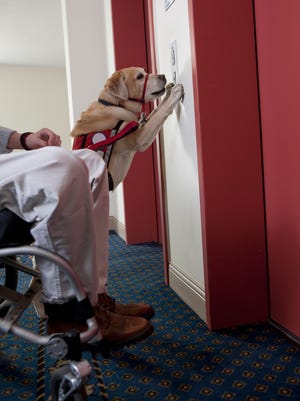 "Actions like designating the ""service dog"" as the state dog apparently is what occupies the halls of power in the state Capitol."