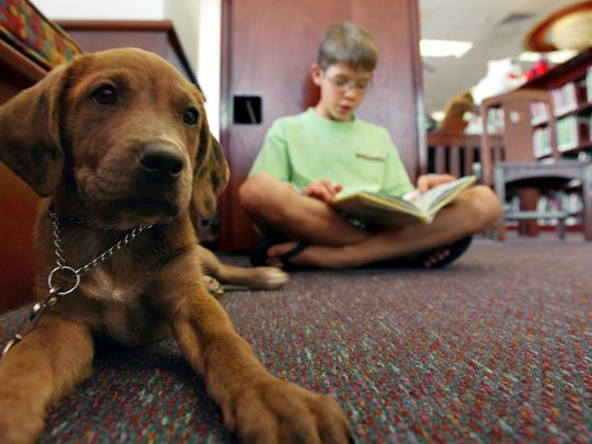 """In this 2006 file photo, Allie, an 8-week-old Catahoula Leopard Dog mix looks around the children's reading room of Headquarters Library as Michael Ashley, 9, reads """"Happy Birthday, Danny and the Dinosaur!"""" Saturday afternoon. The program brings in dogs from the Collier County Humane Society to help children who are shy about reading aloud in front of people."""