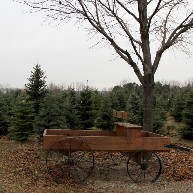 Dry weather hurts Christmas tree farms in mid-Michigan