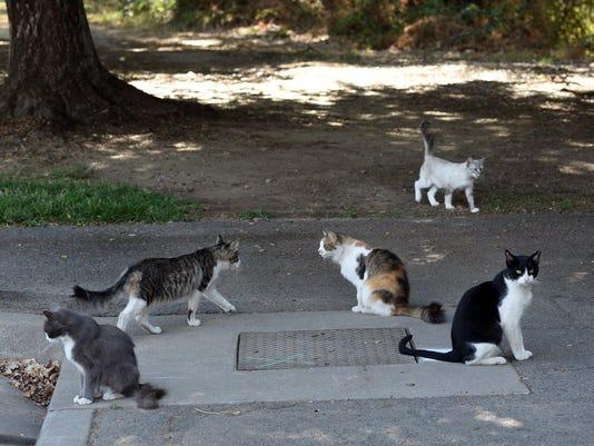 Pet Vet: Readers fear feral cats threaten health of companion cats