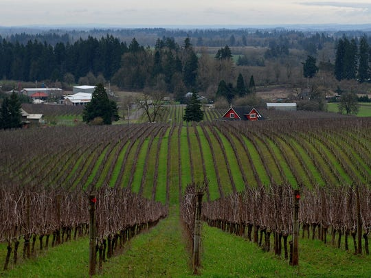 The vineyard stretches out below the tasting room at