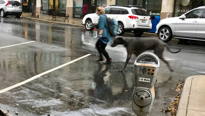 A woman and her dog dash across O. Henry Street Monday morning during a rain shower. A flood watch is in effect Monday and Tuesday for much of WNC.