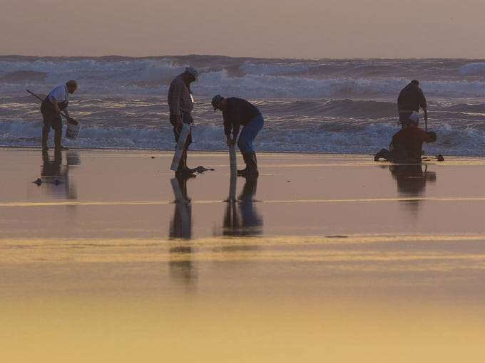 For many in the Pacific Northwest, digging for razor clams is a family outing, particularly in the Puget Sound region.