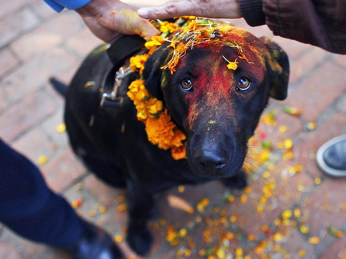 Nepalese police officers apply vermillion powder and marigold garlands on a dog as they perform a Tihar Festival ritual on Nov. 13 at the police kennel division in Katmandu, Nepal. Dogs are worshiped by the Nepalese and to acknowledge their role in providing security during the Tihar Festival, police officers blessed their animals.