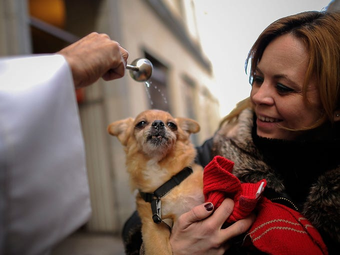 A dog is blessed by a priest during a St. Anthony's Day service Jan. 17 for animals at the Church of San Anton in Madrid, Spain. Dogs, cats, rabbits and even turtles were brought to churches around the world to be blessed during celebrations for the patron saint of animals.