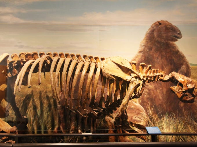 Skeleton of giant sloth found at Seattle-Tacoma International Airport.