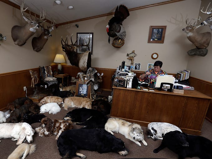 Receptionist Lessie Calvert is surrounded by freeze-dried animals at Anthony Eddy's Wildlife Studio on Feb. 12 in Slater, Mo. Pet lovers across the country count on Anthony Eddy and his team of taxidermists to faithfully preserve Brutus, Fluffy and other beloved companions for posterity.