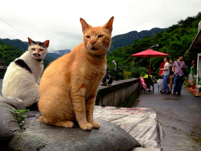 Cats rest on a wall as tourists watch on May 24 in Houtong, Taiwan. Cat lovers are visiting the former coal mining town to photograph the felines.