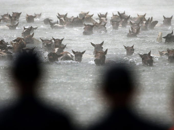 Wild ponies swim across the Assateague Channel during a rain storm July 24 in Chincoteague, Va. Thousands of people watched as wild ponies swam from the Assateague Island national wildlife refuge to Chincoteague to be auctioned off by the Chincoteague Volunteer Fire Co.
