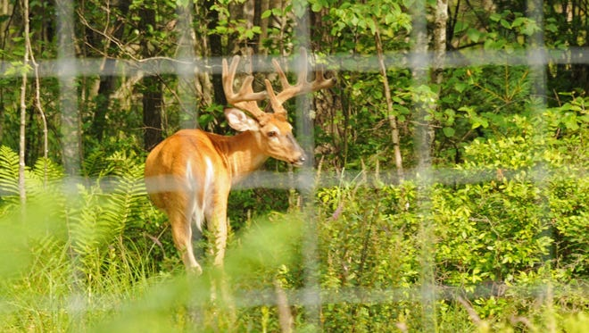 Wisconsin's four private deer farms with the most CWD cases are all north of U.S. 10, and over 75 miles from the state's CWD-endemic region.