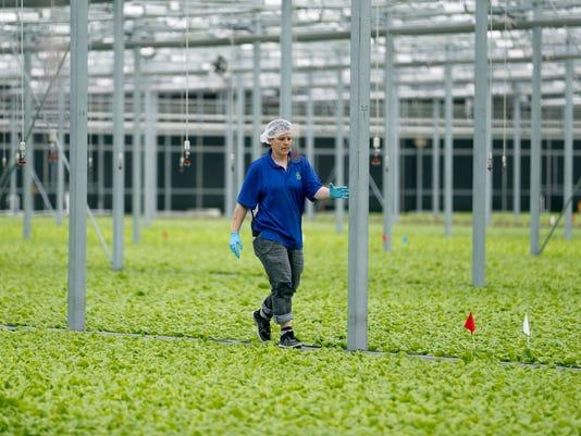 Cleveland hydroponics