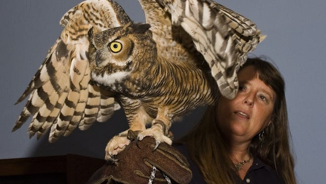"Karen Hoyt of Sky Hunters Environmental Education shows a great horned owl. Birds of prey will be shown during ""Raptor Biology."""