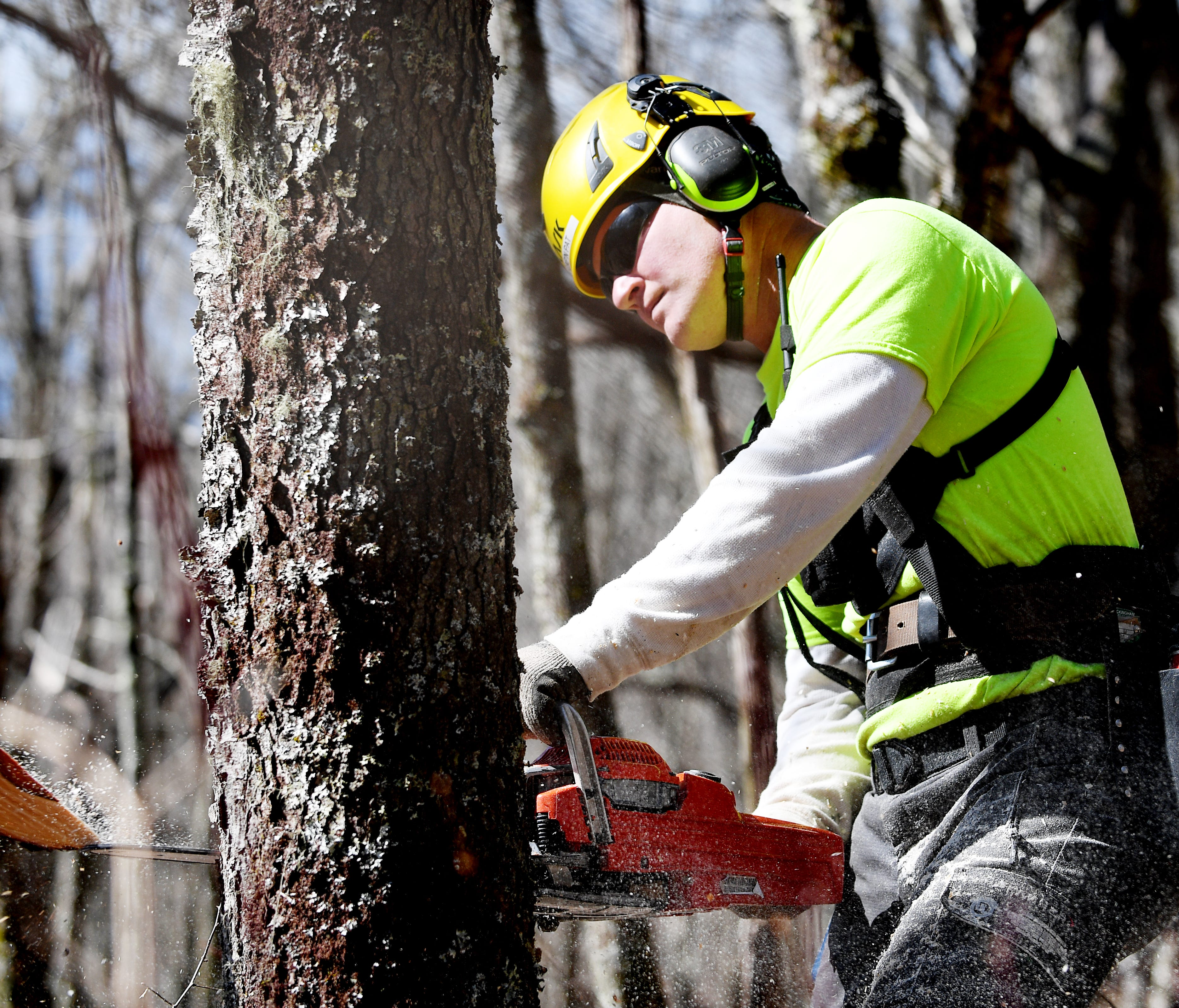 Patrick Kane, a member of the Arborist Incident Response Team, clears a vista along the Blue Ridge Parkway April 13, 2018. Kane is with the Cuyahoga Valley National Park in Ohio.