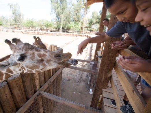 2. Feed the baby giraffe | See baby Davis, born in