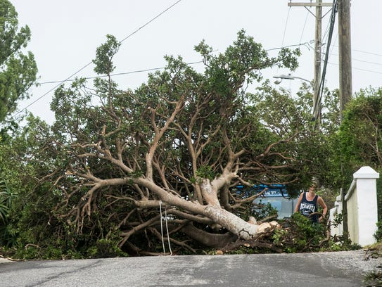 An area resident attempts to pass a tree downed by