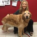 Oakland veterinarian doing study on dogs, cancer
