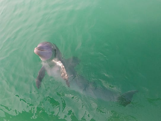 An experienced captain can take you to see dolphins, know where the tarpon are likely to bite or where the best shells are.