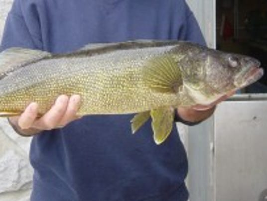 Want a walleye? This is your weekend to fish.