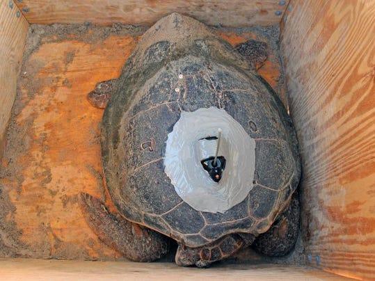 -rj Tour de Turtles 002.jpg_20130728.jpg