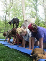 Goat yoga participants line up for the goat walk.