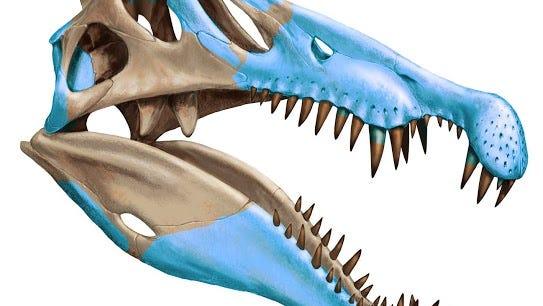 Digital skeletal reconstruction and transparent flesh outline of Spinosaurus aegyptiacus.