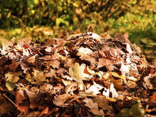 Staunton's leaf collection program will begin Oct. 28.