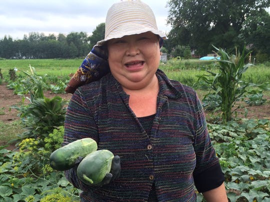 Chao Vxiong harvests cucumbers on July 21 from her