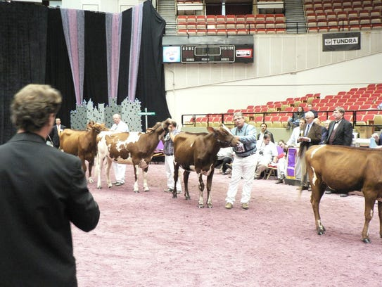 The judge, animal and showman are what show ring competition