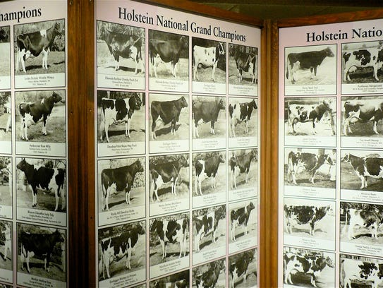 Grand Champion Holstein cows back to 1906 are pictured