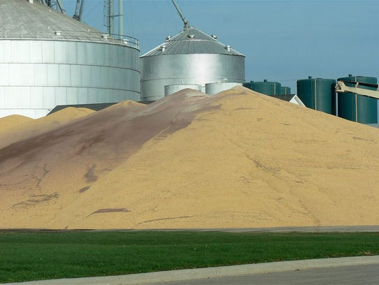 One hundred fifty bushels per acre of corn was near