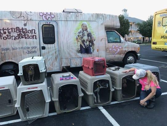 Miranda Lambert inspects dogs in crates MuttNation