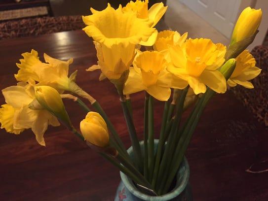 Daffodils for $1.49 at Trader Joe's