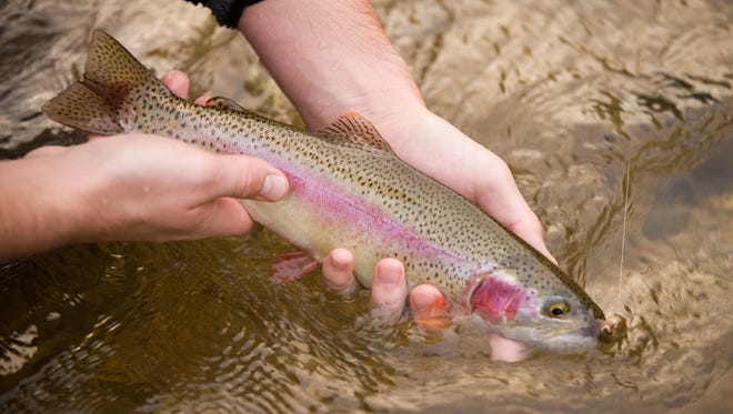 Matthew Taylor and his father Shawn Taylor fish for wild rainbow and browns in the North Fork of the White River near Tecumseh, MO.