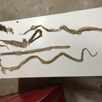 Snakes take over home, couple sues realtor for $2M