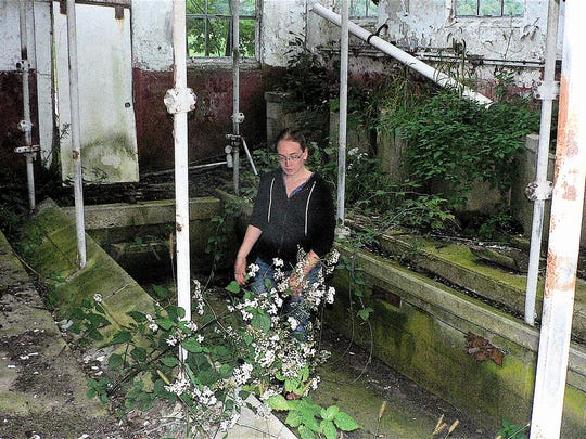 The first milking parlor in Sauk county built in 1959. All that remains is the pit, weeds and ruins. Cari Stebbins, now the farm owner, stands in the overgrown pit where milkers once worked.