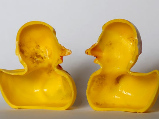 The March 27, 2018 photo shows the inside of a rubber duck after it was cut open for the photo in Nauen, Germany.