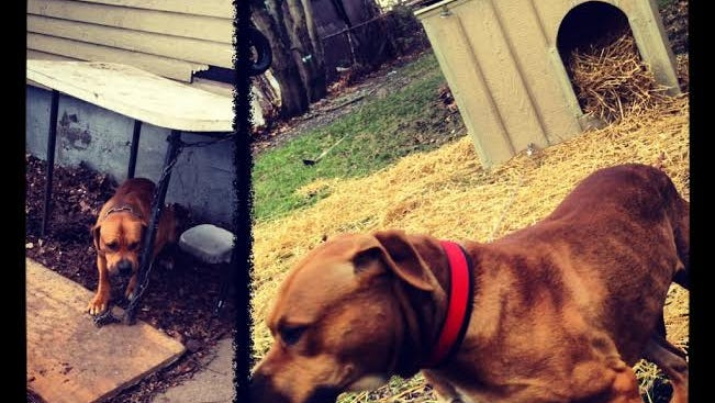 Outdoor pets need shelter.