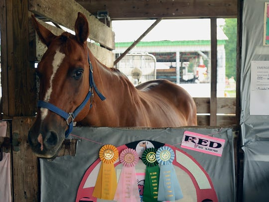 Horses wait in stalls to compete at the St. Clair County
