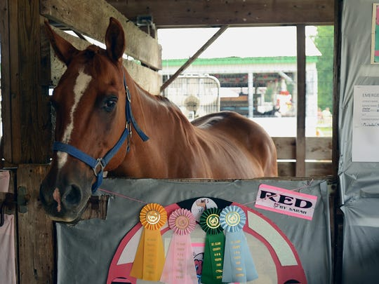Horses wait in stalls to compete at the St. Clair County 4-H and Youth Fair.