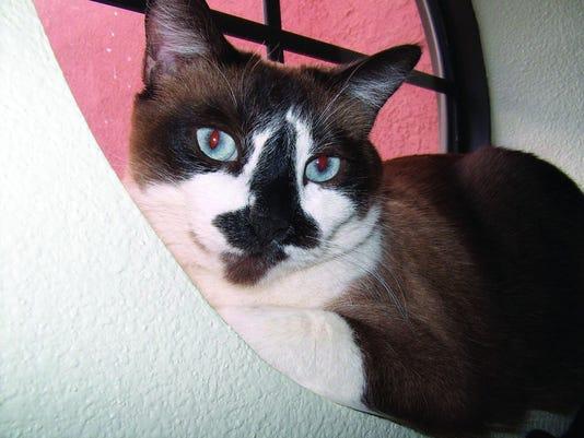 635996226605447217-cat.jpg