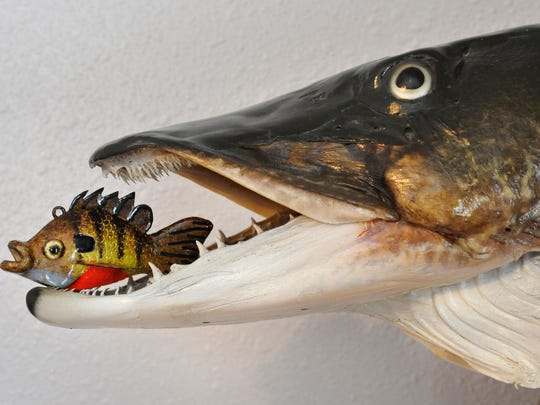 Dennis Bertram, Belgrade, shows one of his decoys in the mouth of a mounted fish.