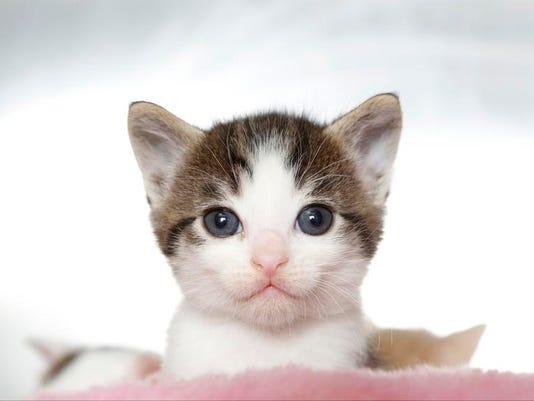 APTOPIX Pets Wild Kit_Ball.jpg