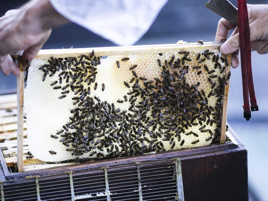 Germany Rooftop Bees